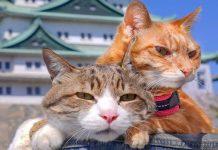 Du lịch Nhật Bản ghé qua đảo mèo Aoshima có gì hấp dẫn?